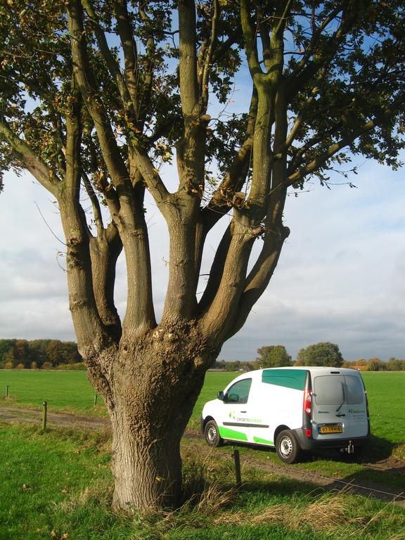 Planmatig boombeheer® | Kosten besparen door innovatief beheren