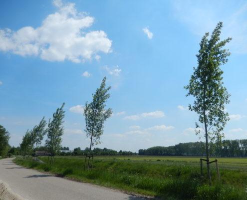bomen vervangen buitengebied
