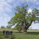 bomenbeleidsplan Weert