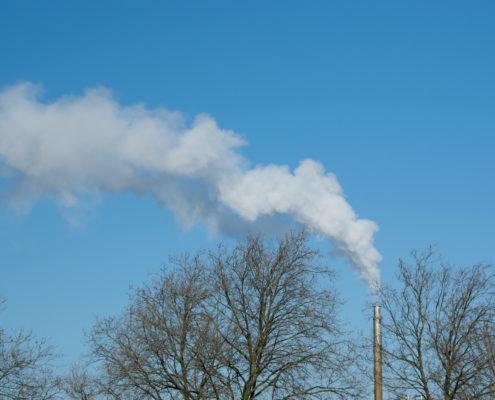 Klimaateffecten van bomen in cijfers Alles over Groenbeheer